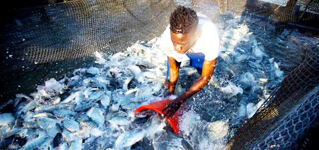 How To Make Money Growing Fish In Your Back Yard (Tilapia Farming)